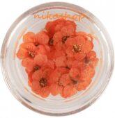 Sušený kvietok - oranžový