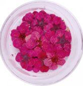 Sušený kvietok - ružový-8290