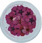 Sušený kvietok - ružový tm-8291