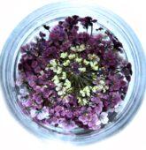 Sušený rozkvet - fialový -8298