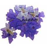 Flower sušené fialové-8262