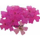 Flower sušené ružové-8267